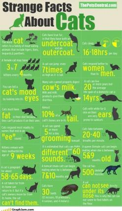 "cat facts  Good info. for cat lovers....  ❁❁❁Thanks, Pinterest Pinners, for stopping by, viewing, re-pinning,  following my boards.  Have a beautiful day! ❁❁❁ ****✮✮""Feel free to share on Pinterest""✮✮"" #animals #gifts www.catsandme.com: Cats, Kitty Ca"
