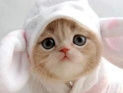 #cat #kitty underpants or bunny ears on head too cute for words need to kiss nose very much: Cats, Cuteness, Animals, Sweet, Pets, Adorable, Bunnies, Kitty, Cute Kittens