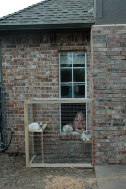 Cat patio. This would be Ideal for Ferrets too. They love to go outside. Just make sure they can't dig underneath. A cement bottom would be best.: Cats, Cat Patio, Animals, Outdoor Cat Enclosure, Pet, Cat Pen, Cat House, Cathouse