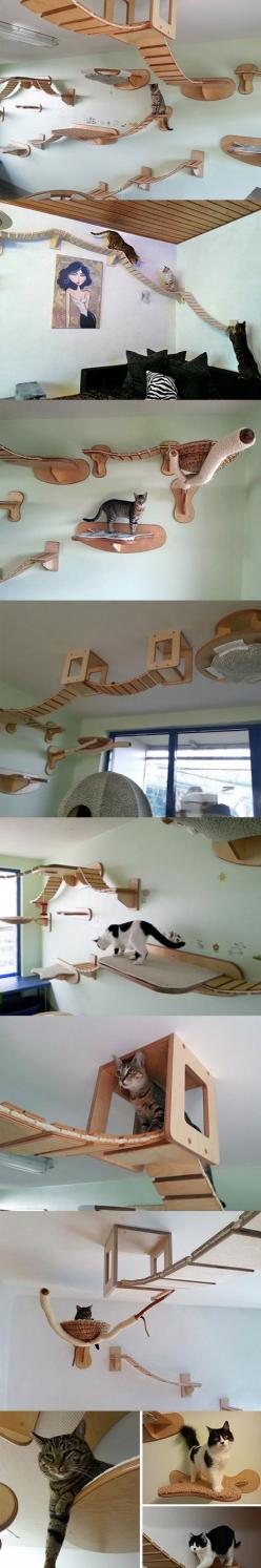 Cat Walk  http://www.ehow.com/ehow-extras/blog/14-photos-of-fancy-cat-furniture-and-tips-on-how-to-recreate-the-designs/: Cat Room Idea, Crazy Cat, Awesome Thing, Diy Cat, Cat Walk