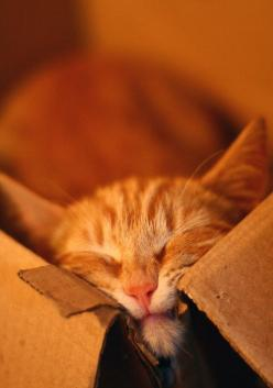 cats and boxes, the smaller the better.: Cats, Orange Cat, Kitten, Animals, Boxes Like, Feline, Photo, Cat Lady, Baby Cat