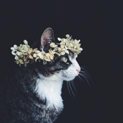 : Cats, Animals, Flower Crowns, We Heart It, Posts, Kitty, Cat Lady