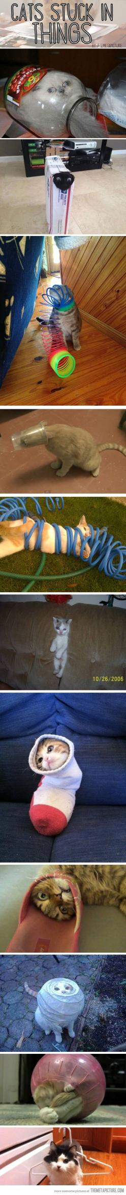 Cats stuck in things...After viewing this vast array of items that cats have gotten themselves stuck in, I think it's safe to say that cats aren't as smart as some people say they are.: Kitty Cat, Giggle, Cats Stuck, Silly Cats, Funny Cat, Crazy C