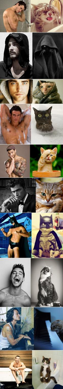 Cats that look like male models. The batman and the piano one kill me!: Giggle, Funny Cats, Funnies, So Funny, Smile, Cat Lady, Male Models, Animal