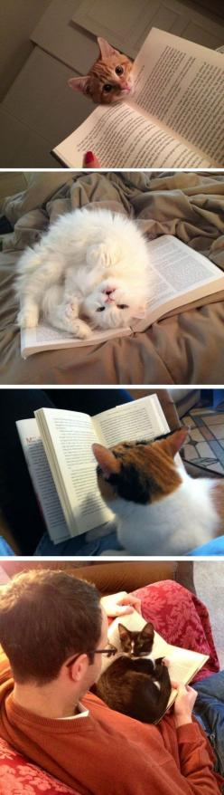Cats Who Have No Intention Of Letting You Read Your Book: Book Lovers, Animals, Cats And Books, Funny Quotes, Typical Cats, Kitty, Cats Reading, Cat Lady