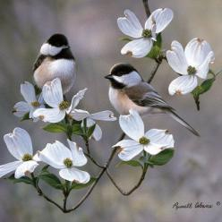Chickadees - what  a beautiful picture: Animals, Beautiful Birds, Tattoo