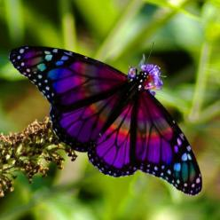 Colorful Butterflies | Weet je nog dat je geleerd hebt dat een vlinder eerst een rups is?: Beautiful Butterflies, Animals, Nature, Color, Flutterby