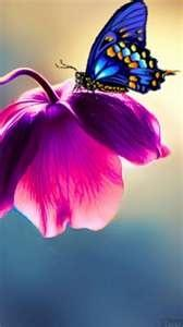 ♡ colors are so beautiful: Beautiful Butterflies, Blue Butterfly, Nature, Color, Flutterby, Purple Flower