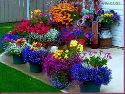 container gardening..such vibrant colors.: Container Gardens, Flower Pot, Yard, Colors, Beautiful, Bold Color, Flowers Garden, Container Gardening