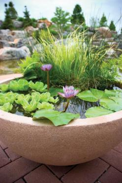 Container water garden ideas - THIS COULD ALSO BE A GREAT IDEA FOR A BALCONY!! ONE COULD ALSO ADD A FEW FISH TO MAKE LIFE A  LITTLE MORE INTERESTING OUI!!  (I so love this!!): Container Water Gardens, Garden Ideas, Container Pond, Water Features, Gardenin