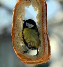 Cool idea ~ rather than throw out old stale bread, hang it in a tree for the birds to enjoy!: Idea, Animals, Fowl, Bird Feeders, Breads, Photo, Birds