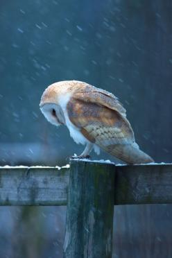 Couldn't have said it better myself.: Animals, Stuff, Nature, Beautiful, Children, Things, Photo, Birds, Barn Owls