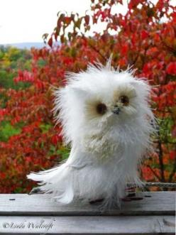 Cute little owl...looks like he's on steroids or something: Fluffy Owl, Animals, Baby Owls, Disheveled Owl, Bad Hair, Morning, White Owl, Birds