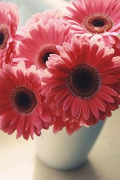 Daisies!: Favorite Flowers, Gerber Daisies, Gerbera Daisies, Color, Gerbera Daisy, Fave Flowers, Fav Flower, Pretty Flowers