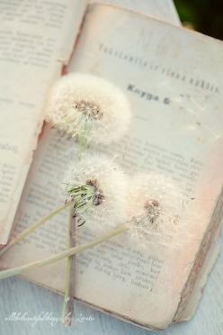 Dare to imagine. Dare to be. Books are the seeds. Dreams are the soil. The fruit of the harvest, a world reborn.: Books, Inspiration, Vintage Book, Beautiful, Things, Dandelions, Flower, Photography
