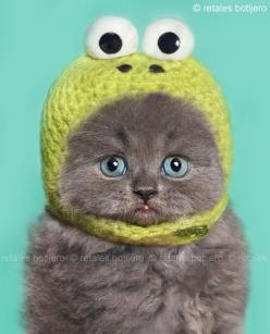 Dear Grandma, I love my new hat, it keeps my ears warm.  Thank you so much.  Really.: Kitty Cats, Kitten, Animals, Funny, Crazy Cat, Box, Has, Dear Grandma, Cat Lady
