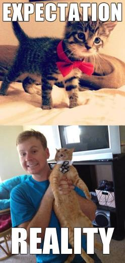 Death in 3, 2, 1... Hahaha this is exactly why my cat looked like when I tried to put a bow tie on him.: Cats, Funny Cat, Funny Pictures, Funny Stuff, Expectation Reality, Expectation Vs Reality, Animal