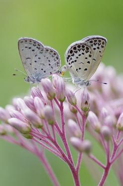 delicate beauty  Leeny: Synchrony~no effort needed!  #Time Out, Tune In, Turn On: Beautiful Butterflies, Nature, Flutterby, Flutter By, Flower, Animal