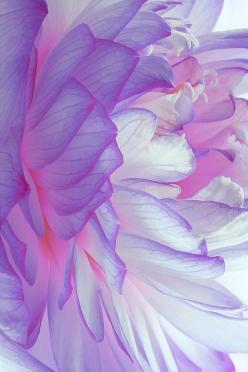 Desert Dreamer- Not sure if this is a real flower or painting..... Either way it is so cool!!!!,: Colour, Inspiration, Color, Purple Flowers, Beautiful, Art, Purple Passion, Garden, Photo