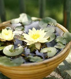DIY- Mini Lily Water Garden. See this project and more tabletop water garden ideas: http://www.midwestliving.com/garden/container/easy-tabletop-water-gardens/: Container Water Garden, Garden Ideas, Water Gardens, Water Features, Watergardens, Water Lily,