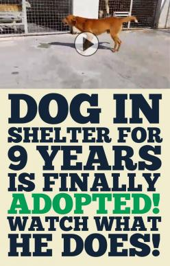 Dog locked up in shelter for 9 years is finally adopted! Watch what he does!!: Adoption Animals, Animal Rescue, Animal Shelters, Animal Shelter Dogs, Dogs For Adoption, Dogs In Shelters, Animal Adoption, Adopt Pet, Animal Dogs