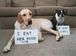 dog shaming: Puppy Dogs, Dog Confessions, Shameless Dogs, Shaming Dogs, Dog Stuff, Awesome Labradors, Doggies And, Dog Shaming And