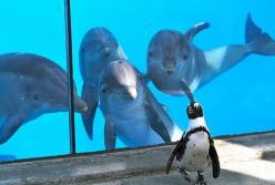 Dolphins seeing their first penguin...this is too cute: Animals, Dolphins, Funny Stuff, Funnies, Penguins, Things, Funny Animal, Photo