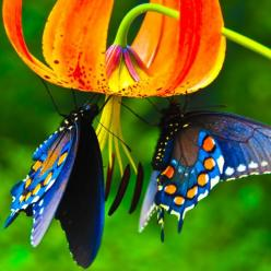"Don't ""they"" say that we eat w/ our eyes first? No wonder these butterflies picked this beauty.: Beautiful Butterflies, Butterfly, Animals, Nature, Color, Beauty, Photo, Flower"
