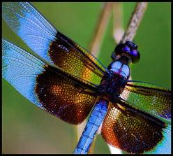 Dragonflies are a personal symbol for me. They are a totem for my spirit and I love all things that have their likeness: Dragon Flies, Butterflies, Nature, Blue, Beautiful, Dragonflies, Animal