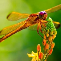 Dragonfly,  ' good mood food ': Bob, Nature, Make It Easier To, Photo, Dragonflies, Animal