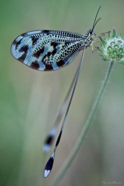 DRAGONFLY!!!!!!!!!!!!!!!!!: Blue Dragonfly, Butterflies Dragonflies, Jo Williams, Animal