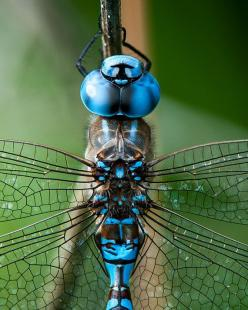 Dragonfly Image Nature Photo Insect Photo by ImagesbyDougParrott, 15.00 dollars: Bugs And Insects Photos, Nature Photos, Photography Insects, Dragonfly Image, Photo Insect, Insect Photo, 15 00, Dragonflies