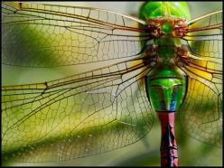 dragonfly magic. There is no way we mere humans can come up with any piece of art that could outdo nature.: Dragon Flies, Dragonflies Butterflies, Dragonfly Photography, Butterflies Moths Dragonflies, Butterflies Insects, Green Dragonfly, Colorful Dragonf