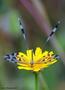 Dragonfly on the Flower: Butterflies Dragonflies, Dragon Flies, Nature, Dragonfly S, Flower, Animal
