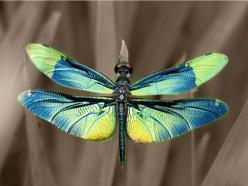 Dragonfly - photo by Kaz Watanabe: Dragon Flies, Animals, Bugs, Butterflies, Beautiful, Photo, Dragonflies