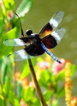 Dragonfly! This site has lots of interesting ideas on recycling in the garden. Some of them I even like! :): Bugs Dragonflys, Butterflies Dragonflies Moths, Animals, Butterflies Moths Dragonflies, Dragonfly S, Flutterby