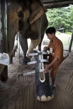Elephant prosthetic leg at the Friends of the Asian Elephant (FAE) elephant hospital in Thailand. New hope...Awesome to see.: Elephants, Amazing, Animals, Sweet, Awesome, Elephant Prosthetic, Legs, Things