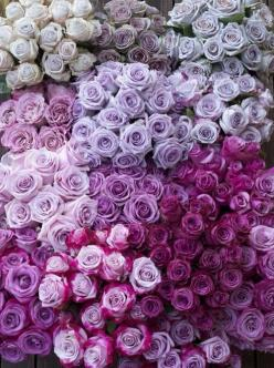 Even our roses get ombre'd.: Lavender Rose, Color, Wedding, Bloom, Flowers, Garden, Purple Roses, Flower, Purple Flower
