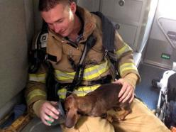 Firefighter With Pet Oxygen Mask Saves Dachshund Puppy: Mask Saves, Hero, Dachshund Puppies, Saves Dachshund, Pets, Firefighters, Pet Oxygen