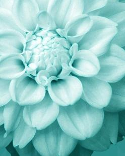 flower: Beautiful Flower, Colour, Turquoise, Colors, Tiffany Blue, Blue Flower, Color Palette, Flowers, Aqua