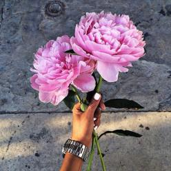 "Flowers for you!  ""Life isn't about finding yourself. Life is about creating yourself."": Beautiful, Flower Power, Bloom, Pink, Things, Flowers, Pretty, Floral, Peonies"