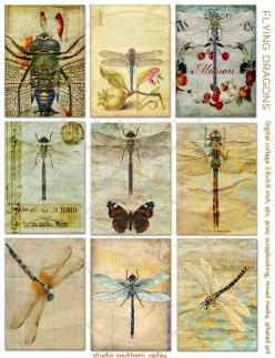 FLYING DRAGONS - 9 Digital collage print Dragonflies for scrapbooking, journaling, mixed media, altered art, album making, cards, tags: Digital Collage, Album, Print Dragonflies, Making Cards, Dragonfly, Altered Art, Flying Dragons