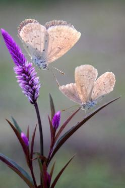 For the Love of God by Rizal P*: Beautiful Butterflies, Butterflies, Butterflies, Flutterby, Photo, Flower, Animal