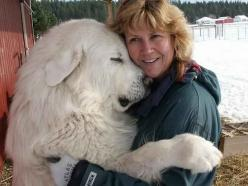 Foreboding to predators, but loyal and sweet to family. The Great Pyranees- yep- they're big!: Animals, Sweet, Hug, Great Pyrenees, Pet, Puppy, Friend, Big Dogs