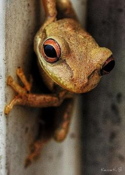 Froggy by Kenneth B, via Flickr: Frog Amphibians, Frogs Frogs, Animals Frogs, Froggy, Amphibians Frogs Reptiles, Photo, Reptiles Amphibians