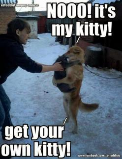 Fun Claw - Funny Cats, Funny Dogs, Funny Animals | Humor and Funny Pics: Funny Animals, Cats, Dogs, Pet, Funny Stuff, Humor, Funnies, Kitty