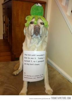 Funny and cute!: Animals, Dogs, Dog Shaming, Stuff, Funny Animal