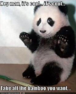 Funny Animal Pics with Sayings | Funny animal quotes: Animal Pics, Funny Animals, Animal Quotes, Funnyanimal, Funny Stuff, Funnies, Funny Pet, Pandas
