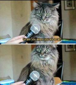 Funny Cat Memes rule! find more funny cats here http://www.funnycatsblog.com #funnycatmemes #funnycats #funnycat: Animals, Funny Cats, Funny Stuff, Humor, Funnies, Funny Animal