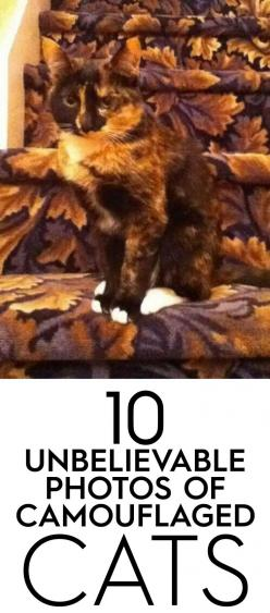 funny cats: Camo Cat, Animals Funny, Funny Cats, Funny Kittens, Unbelievable Photos, Camouflaged Cats, Cats Kittens, Camouflage Cats, Cats Funny
